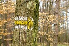 Кора дерева с стрелкой Стоковые Фото