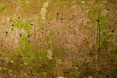 Кора дерева с с грибком Стоковое Фото
