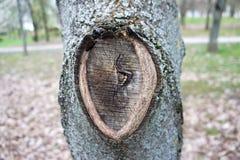 Кора дерева, текстура, предпосылка подрезать Стоковое Изображение RF