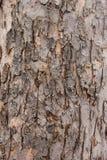 Кора дерева для предпосылок Стоковые Фотографии RF