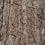 Кора дерева Стоковое Фото