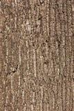 Кора дерева Стоковое Изображение