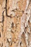 Кора дерева Стоковые Фото