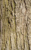 Кора дерева Стоковые Изображения