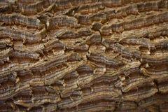 Кора дерева стоковое изображение rf