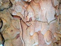 Кора дерева Aspen Стоковые Изображения RF