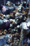 Коралл жизни Стоковая Фотография