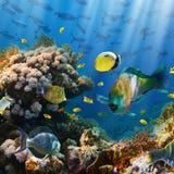 Коралл и рыбы Стоковое Изображение RF