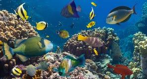 Коралл и рыбы Стоковая Фотография