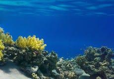 Коралл и рыбы Стоковое фото RF