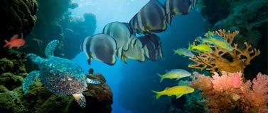 Коралл и рыбы Стоковые Изображения RF
