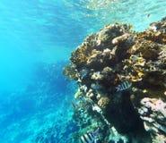 Коралл и fishs в Красном Море Стоковая Фотография