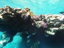 Коралл и fishs в Красном Море Стоковые Изображения RF