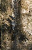 Кора конца дерева вверх посветила с солнцем стоковое изображение