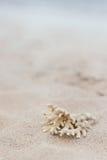 Коралл на песке с космосом для текста Стоковые Фото