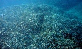 Коралловые рифы стоковая фотография rf