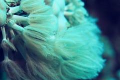 Коралловый риф в теплом море Стоковые Фото