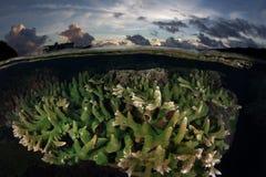 Коралловый риф и заход солнца Стоковая Фотография