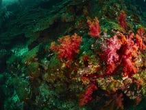 Коралловый риф и рыбы рифа Стоковое фото RF