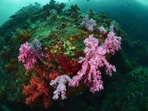 Коралловый риф и рыбы рифа Стоковые Изображения RF