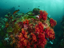 Коралловый риф и рыбы рифа Стоковое Изображение