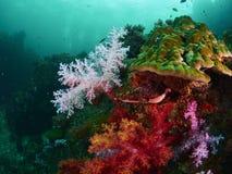 Коралловый риф и рыбы рифа Стоковое Изображение RF