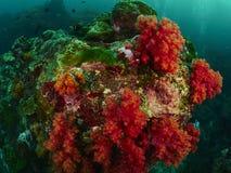Коралловый риф и рыбы рифа Стоковые Фотографии RF