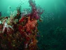 Коралловый риф и рыбы рифа Стоковое Фото