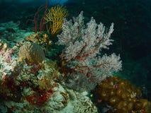 Коралловый риф и рыбы рифа Стоковые Изображения