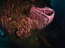 Коралловый риф и рыбы рифа Стоковая Фотография