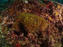 Коралловый риф и рыбы рифа Стоковая Фотография RF