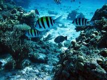 Коралловый риф и рыбы Стоковое фото RF