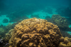 Коралловый риф на острове Lipe в Таиланде Стоковые Фото