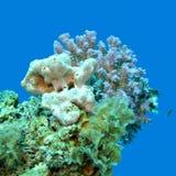 Коралловый риф на предпосылке открытого моря, подводной Стоковые Изображения