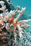 Коралловый риф с губкой моря - подводной Стоковое Изображение RF