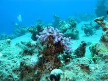 Коралловый риф с кораллом пальца в тропическом море на больших глубинах, u Стоковое Изображение RF