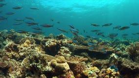 Коралловый риф с рыбами 4k множества акции видеоматериалы