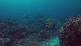 Коралловый риф с рыбами 4k множества сток-видео
