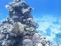 Коралловый риф с экзотическими рыбами Anthias и bannerfish обучать, underwater Стоковая Фотография RF