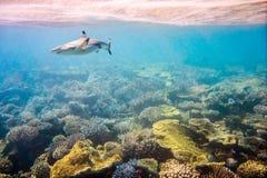 коралловый риф тропический Стоковые Фото