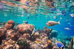 коралловый риф тропический Стоковые Фотографии RF