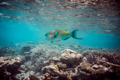 коралловый риф тропический Стоковое фото RF