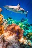 коралловый риф тропический Стоковая Фотография