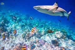 коралловый риф тропический Стоковая Фотография RF