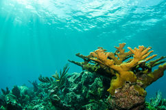 Коралловый риф Стоковое Изображение RF