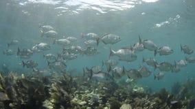 Коралловый риф сток-видео