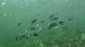 Коралловый риф акции видеоматериалы