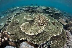 1 коралловый риф Стоковые Фотографии RF