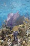 Коралловый риф Grand Cayman Стоковые Фото
