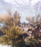 Коралловый риф Grand Cayman Стоковые Изображения